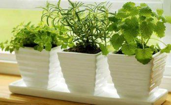 Комнатные растения, которые благотворно влияют на качество нашего сна