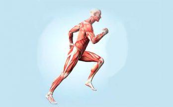 Ваше здоровье: как избежать заболеваний органов движения