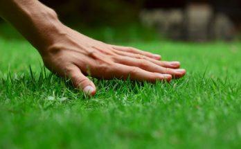 Садовые ножницы для стрижки травы и других задач: выгодное приобретение в любое хозяйство