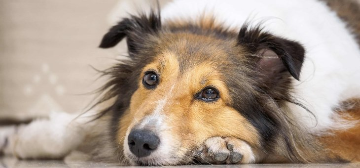 как научить пса оставаться дома одному