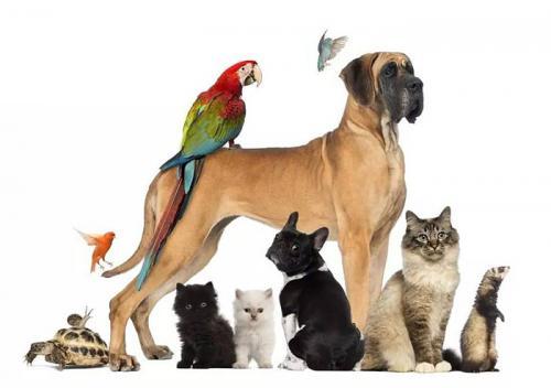симс 3 питание для животных