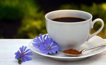 Взвешены и счастливы: эффективность корня цикория при похудении и другие его полезные свойства