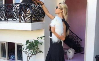 Пэрис Хилтон покрасила своих собачек