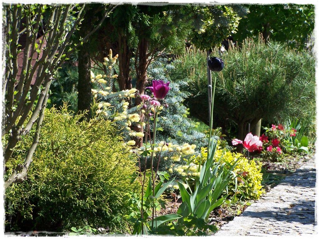 Роль растений в вашем саду: что вы должны знать