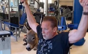 Тренировка с ослом Лулу: Арнольд Шварценеггер позабавил поклонников новым видео