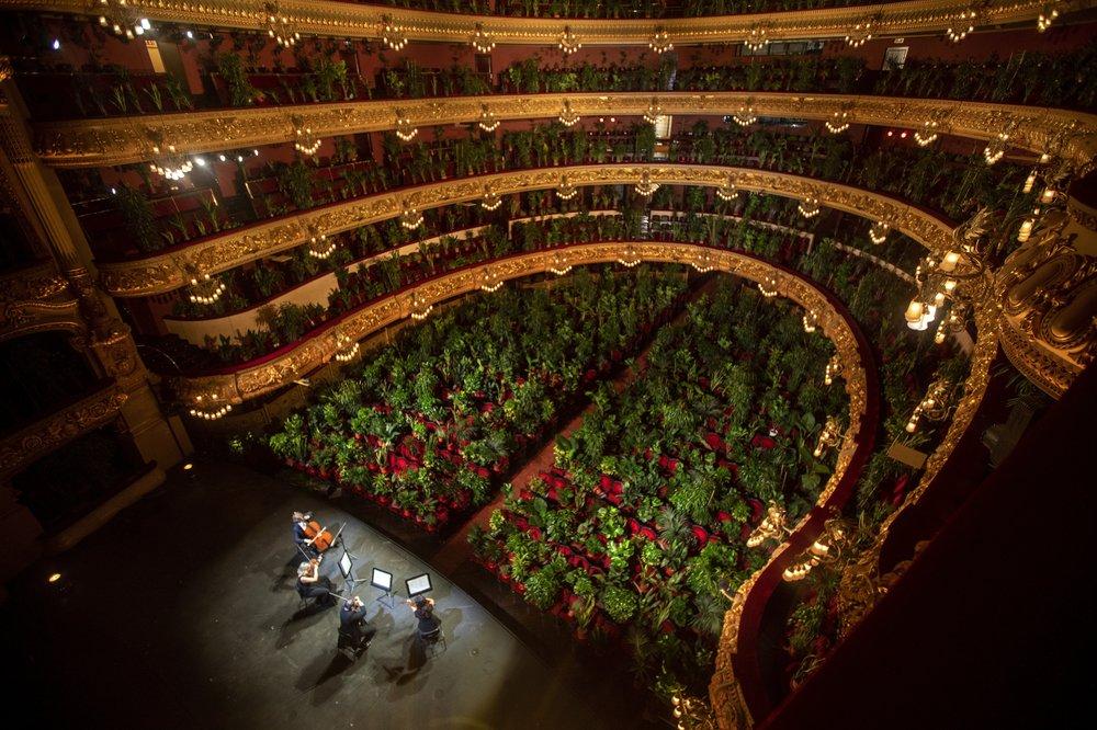 В Барселоне сыграли концерт для комнатных растений