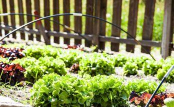 Как ухаживать за садом и огородом: несколько важных советов