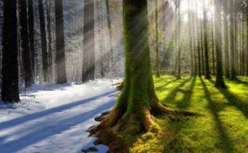 Акклиматизация в жарком климате: как облегчить процесс