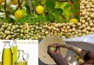 Что такое масло марулы: и как его использовать в уходе за собой