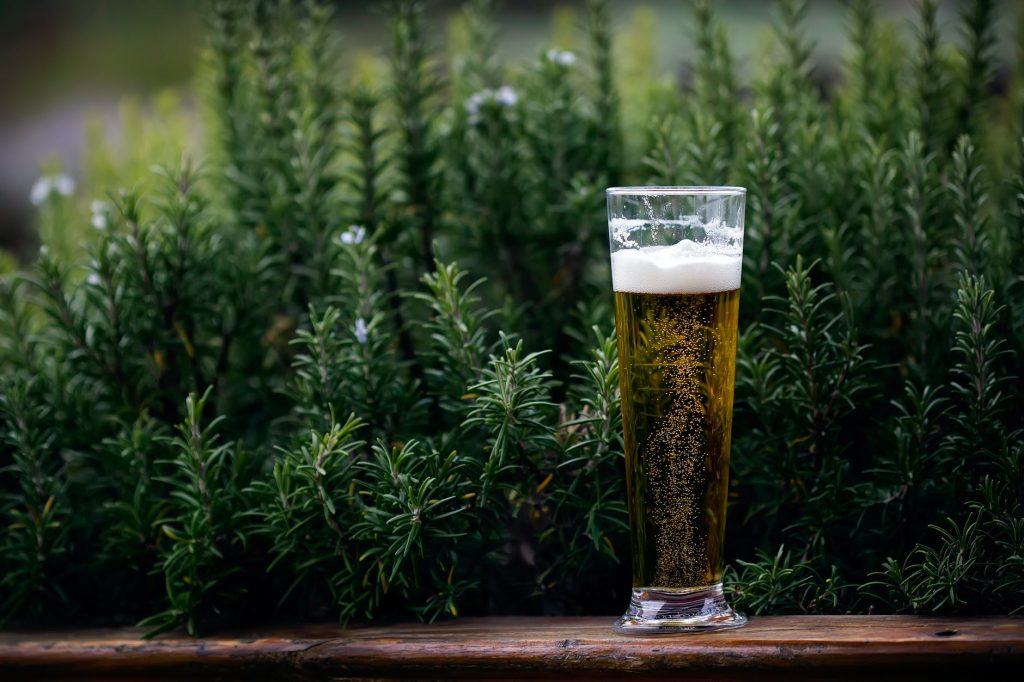 Какую пользу может приносить организму пиво