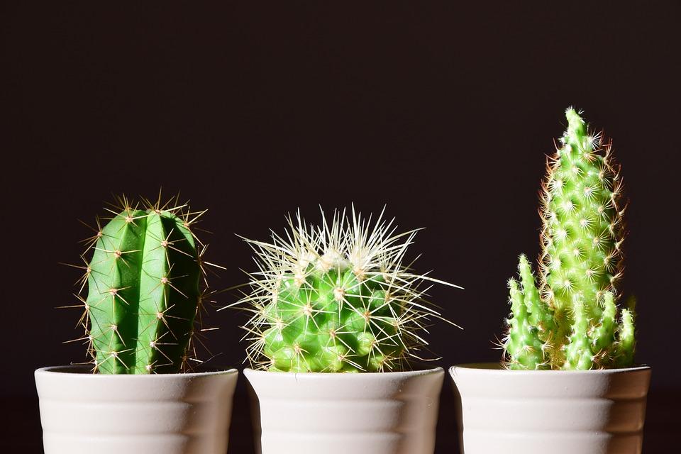 6 видов комнатный растений, опасных для здоровья