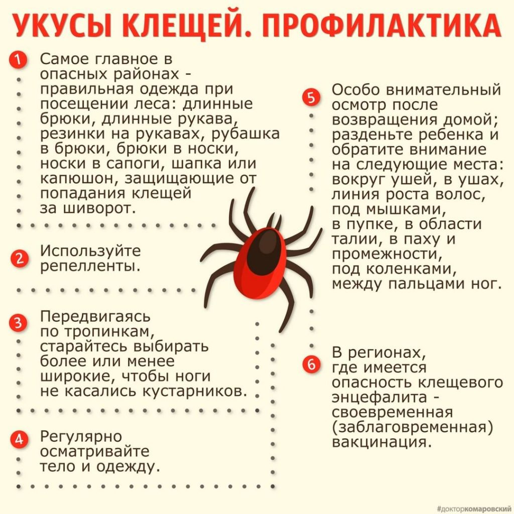 доктор Комаровский рассказал об обязательной профилактике в сезон клещей