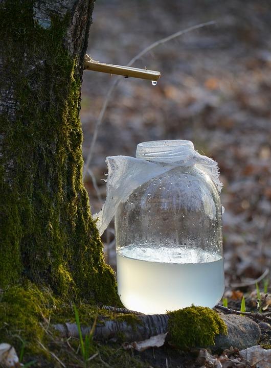 Березовый сок нормализует давление, снижает отеки и препятствует разрушению костной ткани