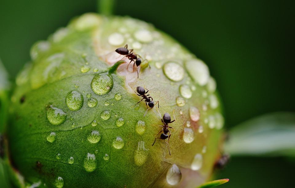 как с помощью муки и других подручных средств избавиться от муравьев в доме
